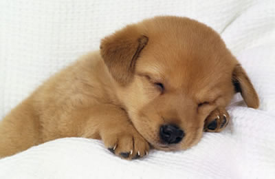 Image result for nap